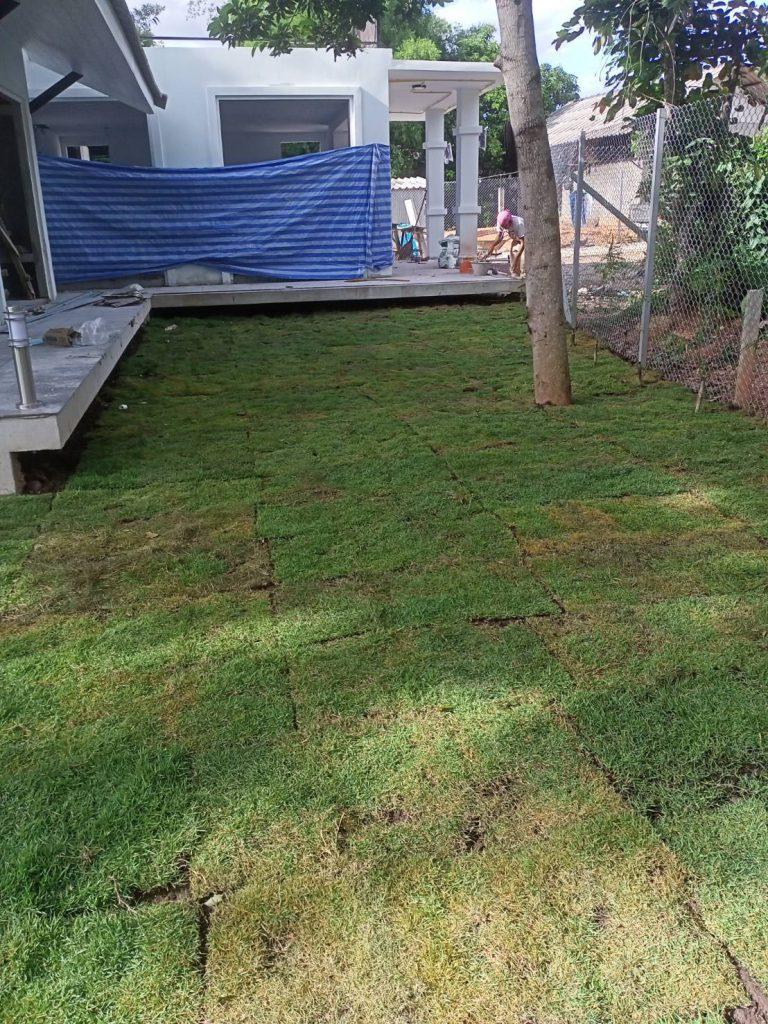 การปลูกหญ้า